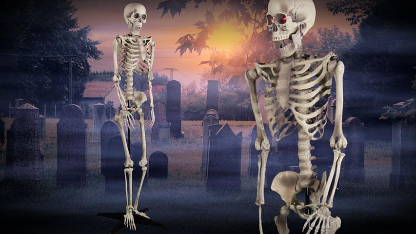 5 Foot Skeleton